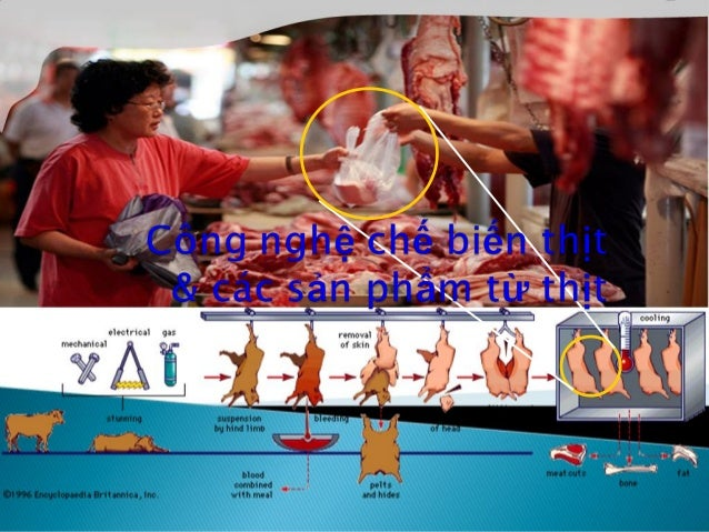  Heo cung cấp chế biến thịt phải: ◦ Hoạt động và ăn uống bình thường ◦ Không có dấu hiệu đi khập khểnh, đi 4 chân phải nh...