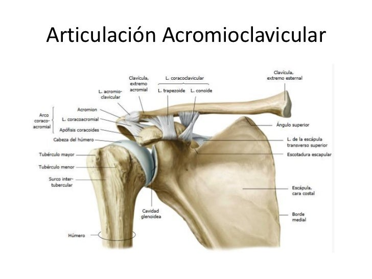 glenohumeral joint steroid injection technique