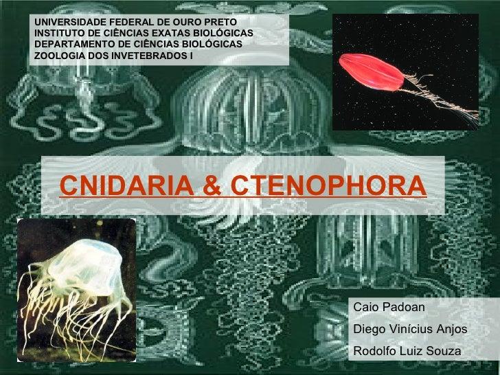 CNIDARIA & CTENOPHORA UNIVERSIDADE FEDERAL DE OURO PRETO INSTITUTO DE CIÊNCIAS EXATAS BIOLÓGICAS DEPARTAMENTO DE CIÊNCIAS ...