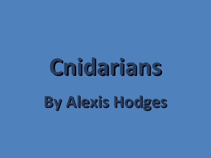 Cnidarians By Alexis Hodges