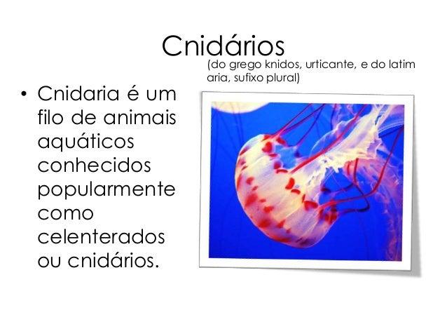 Cnidários Slide 3