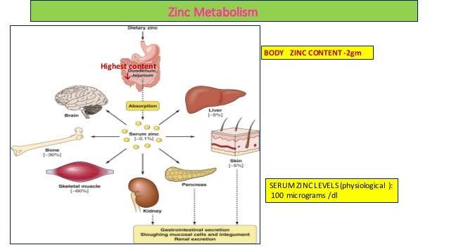 El artículo breve le enseña los entresijos de Booster de metabolismo y lo que debe hacer hoy