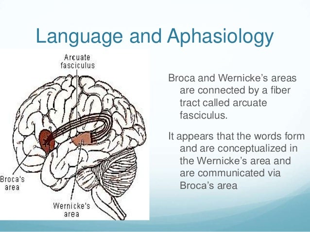 Language and Aphasiology             Broca and Wernicke's areas               are connected by a fiber               tract...