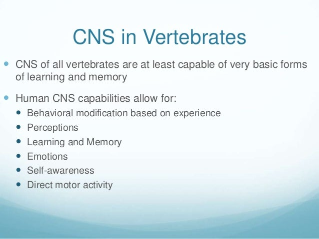 CNS in Vertebrates CNS of all vertebrates are at least capable of very basic forms  of learning and memory Human CNS cap...