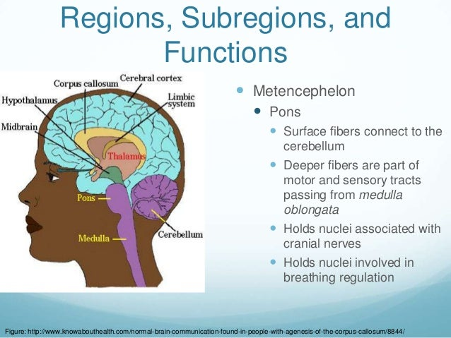 Regions, Subregions, and                        Functions                                                                 ...