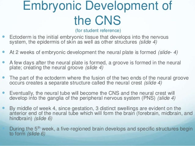 Embryonic Development of                 the CNS                                 (for student reference) Ectoderm is the ...