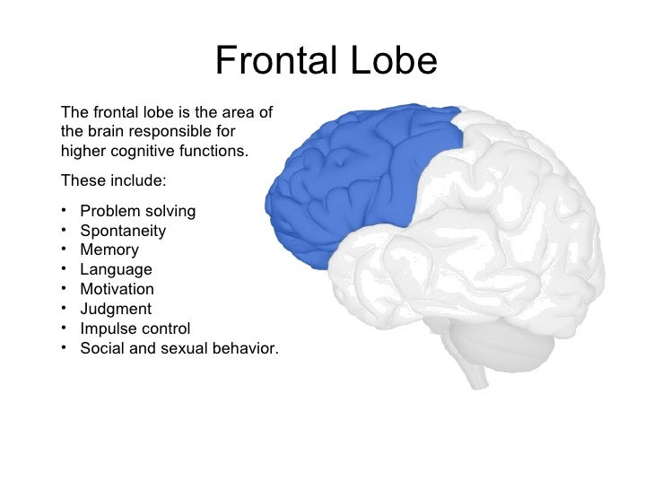 Area of the brain that controls sexuality