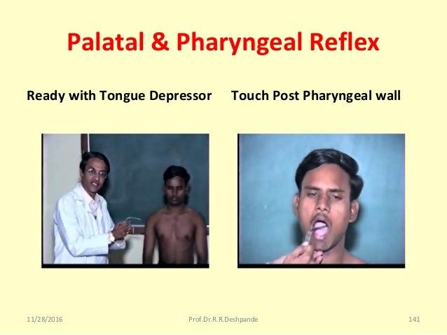 Palatal & Pharyngeal Reflex Ready with Tongue Depressor Touch Post Pharyngeal wall 11/28/2016 Prof.Dr.R.R.Deshpande 141