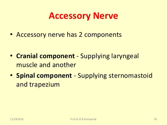 Accessory Nerve • Accessorynervehas2components • Cranial component -Supplyinglaryngeal muscleandanother • Spinal ...