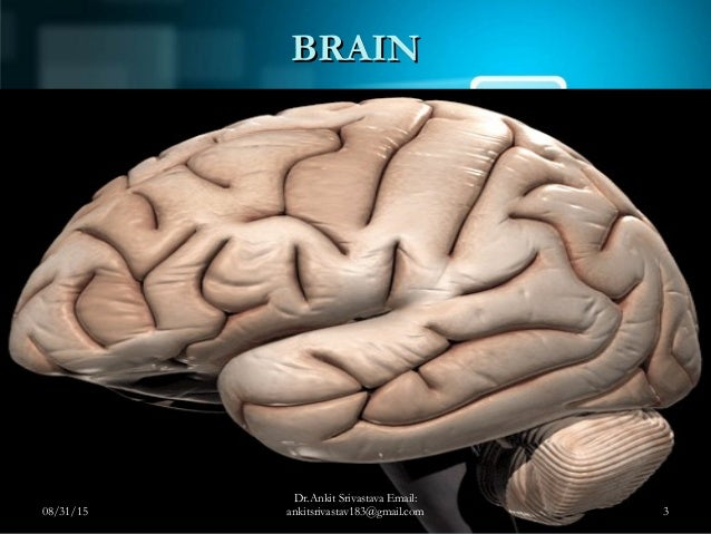 Central Nervous System (CNS) Examination Slide 3
