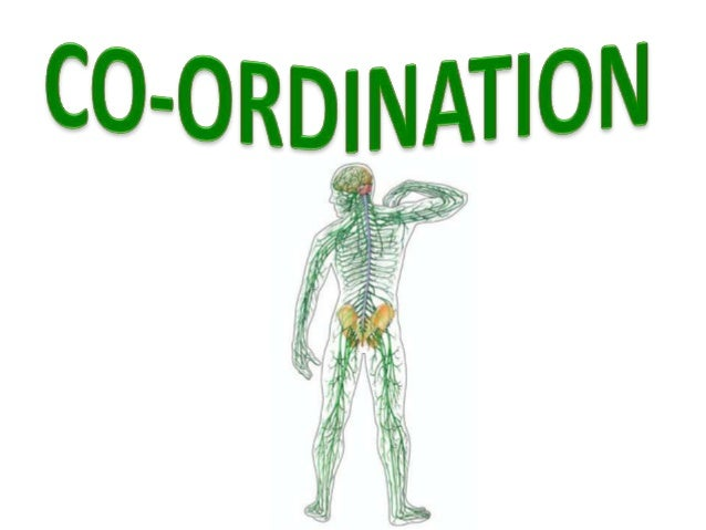  all organs and systems in a healthy human body are co-ordinated  co-ordinated means :  they co-operate with one anothe...