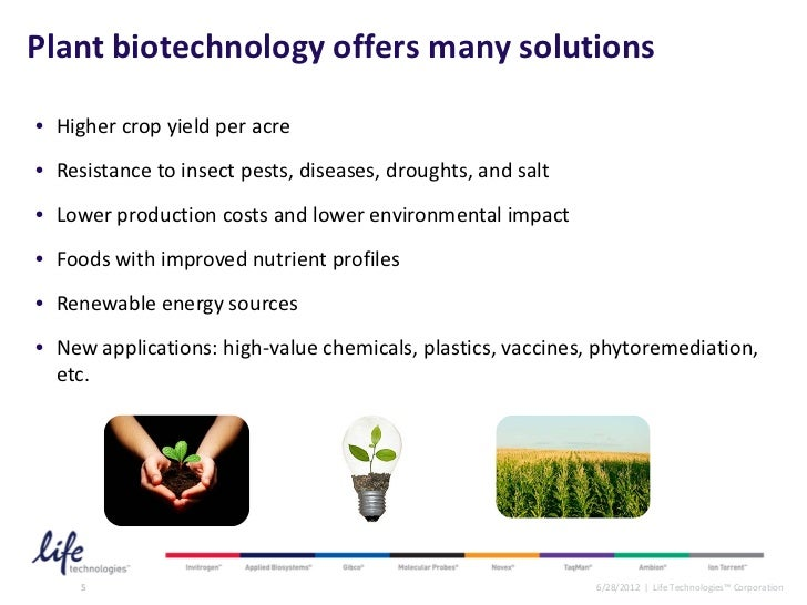essay on biotechnology in agriculture Agriculture is the cultivation and breeding of animals and plants to provide food, fiber crop alteration and biotechnology wheat cultivar tolerant of.