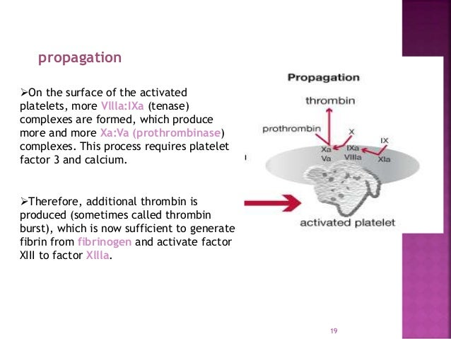 Homeostasis And Clotting Factor And DIC