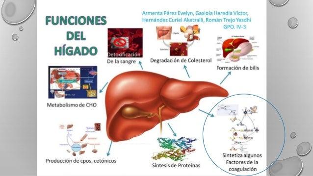 TRASTORNOS DE LA COAGULACION EN HEPATOPATIAS Slide 3