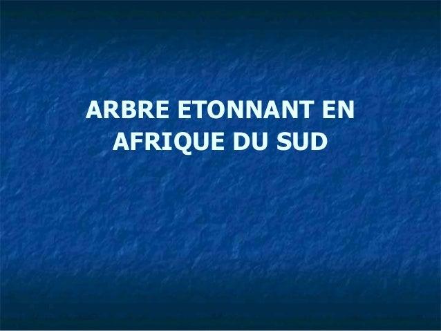 ARBRE ETONNANT EN AFRIQUE DU SUD