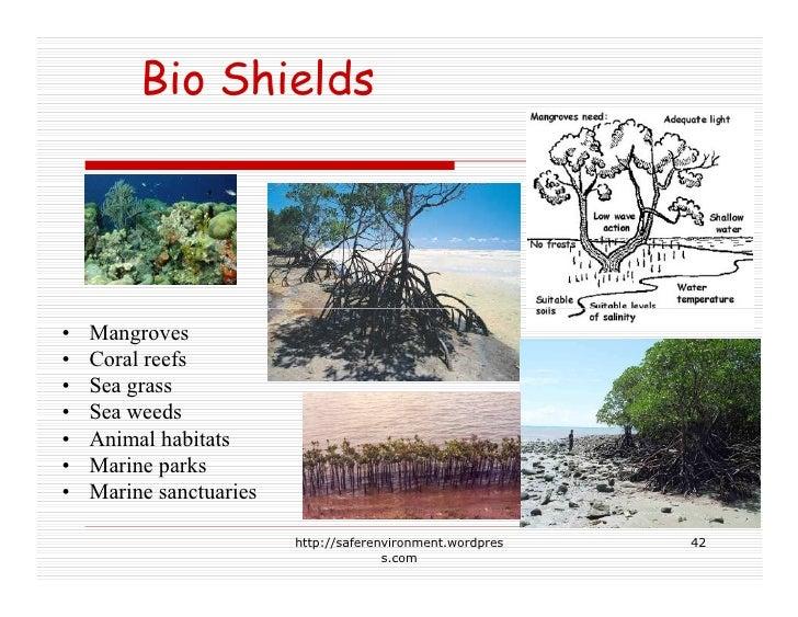 Bio Shields     •   Mangroves •   Coral reefs •   Sea grass •   Sea weeds •   Animal habitats •   Marine parks •   Marine ...