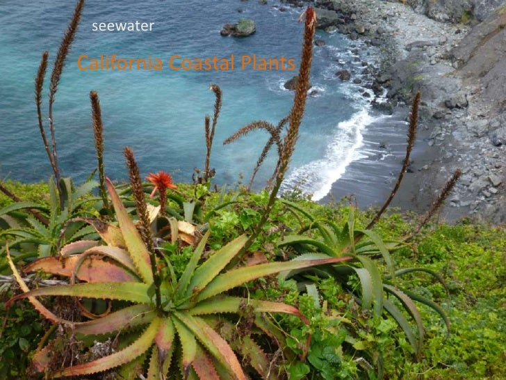 seewaterCalifornia Coastal Plants<br />