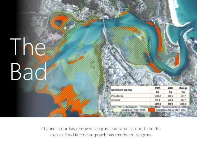 Channel scour has removed seagrass and sand transport into the lakes as flood tide delta growth has smothered seagrass The...