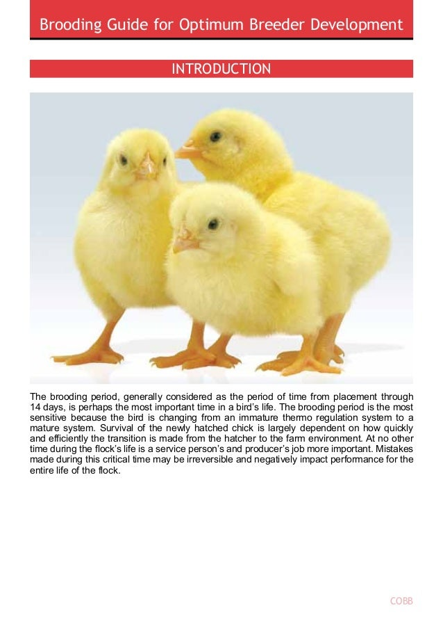 Brooding Guide for Optimum Breeder Development COBB 1 • • Immune system An understanding of the physiological changes that...