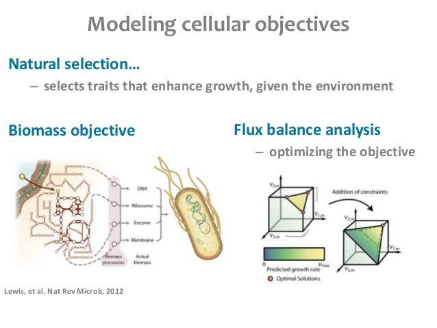 Cobra phylogeny paper slides Slide 3