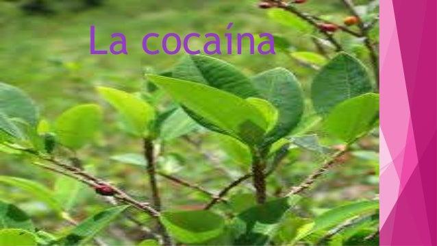 Cocaina Slide 2