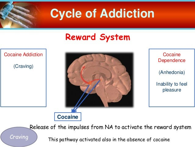 cocaine dependence What is addiction addiction is a these 13 principles of effective drug addiction treatment were developed based on three decades of scientific research.
