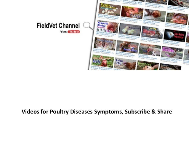 Videos for Poultry Diseases Symptoms, Subscribe & Share