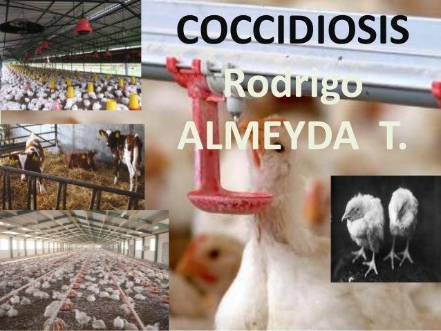 COCCIDIOSIS Rodrigo ALMEYDA T.