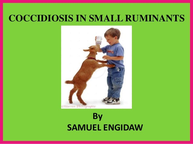 COCCIDIOSIS IN SMALL RUMINANTS By SAMUEL ENGIDAW .