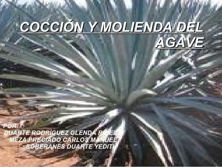 COCCIÓN Y MOLIENDA DEL AGAVE POR: DUARTE RODRÍGUEZ GLENDA RIGEL MEZA PRECIADO CARLOS MANUEL SOBERANES DUARTE YEDITH