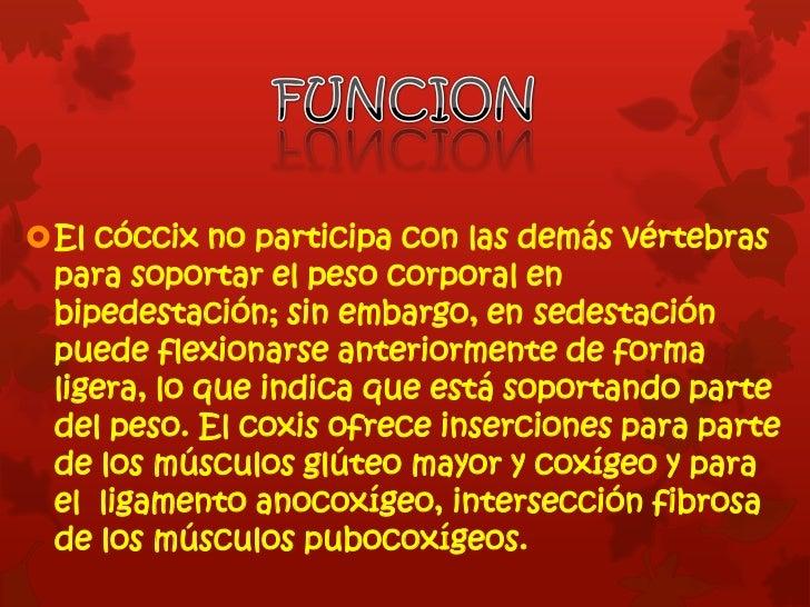 Hueso del Coccix