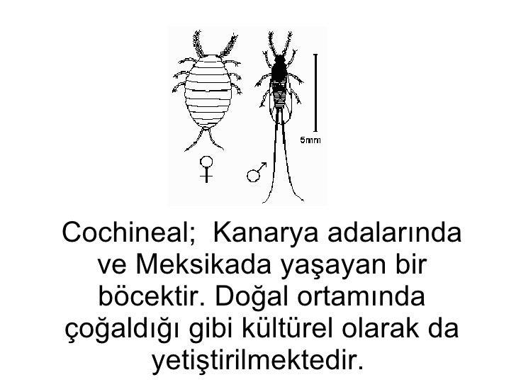 Cochineal;  Kanarya adalarında ve Meksikada yaşayan bir böcektir. Doğal ortamında çoğaldığı gibi kültürel olarak da yetişt...