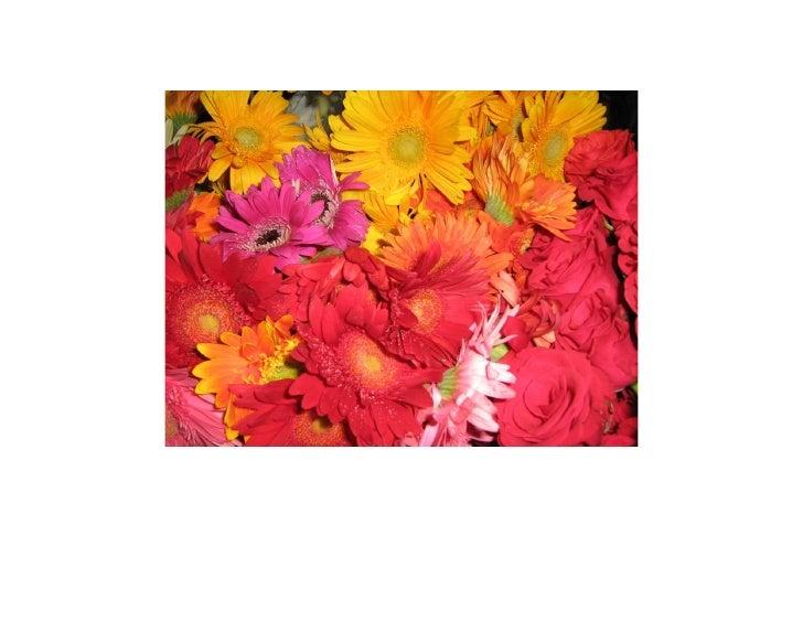 Cochin Flower Show 2008