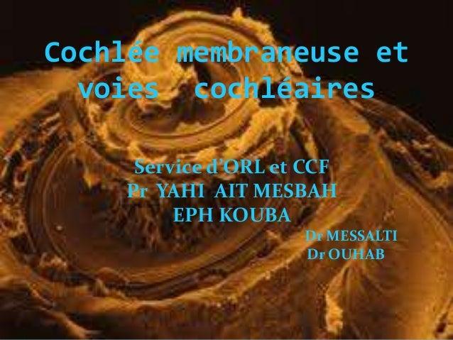 Cochlée membraneuse et voies cochléaires Service d'ORL et CCF Pr YAHI AIT MESBAH EPH KOUBA Dr MESSALTI Dr OUHAB