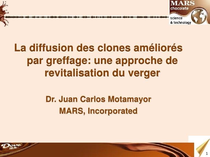La diffusion des clones améliorés  par greffage: une approche de       revitalisation du verger      Dr. Juan Carlos Motam...