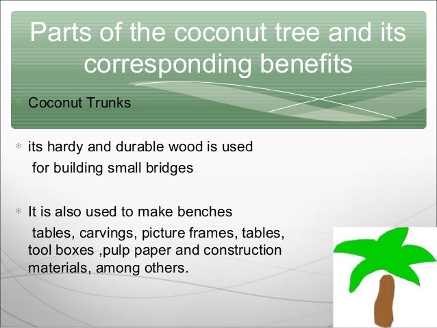 essay on coconut tree Coconut essayscoconut's effectiveness shines on insomia, arthritis, hypertension – try coconectar possible prevention, better yet, cure to different ailments would be the latest product fresh from the coconut tree.