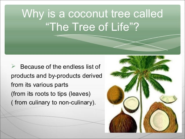 about coconut tree essay Coconuts are exotic, edible fruits produced in coconut trees the coconut tree is a kind of palm tree with a single trunk and has been used for many purposes since prehistoric times.