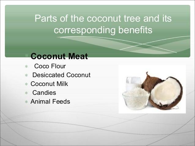 Coconutee ppt 4 toneelgroepblik Images