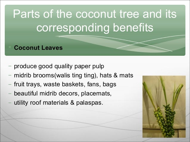 coconut tree ppt 6 parts of the coconut tree