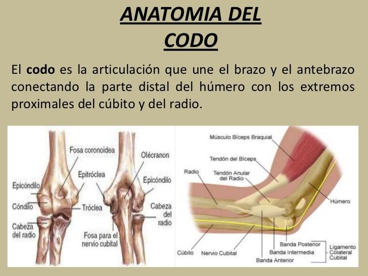 PATOLOGIAS DEL CODO