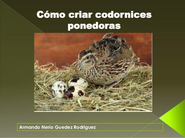 Armando Nerio Guedez Rodriguez C�mo criar codornices ponedoras