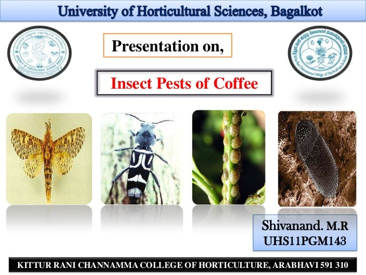 Presentation on,                 Insect Pests of Coffee                                              Shivanand. M.R       ...