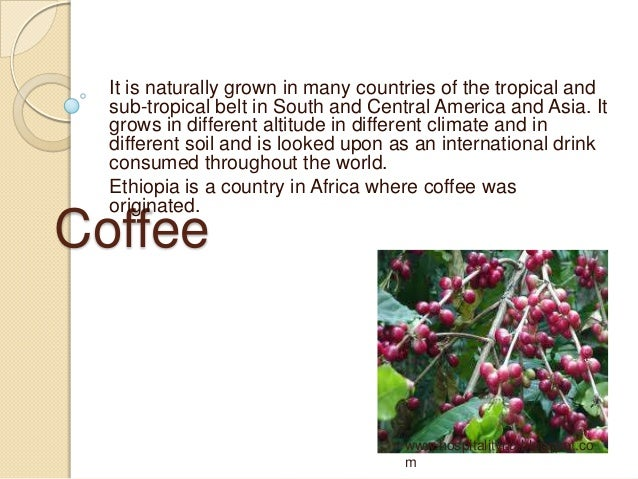It is naturally grown in many countries of the tropical and  sub-tropical belt in South and Central America and Asia. It  ...