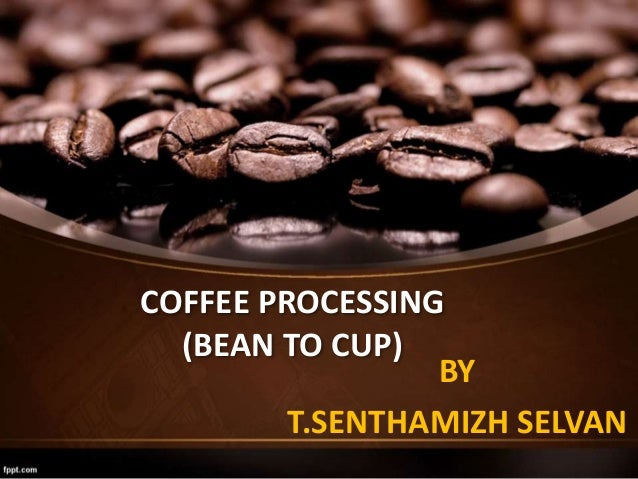 COFFEE PROCESSING (BEAN TO CUP) BY T.SENTHAMIZH SELVAN