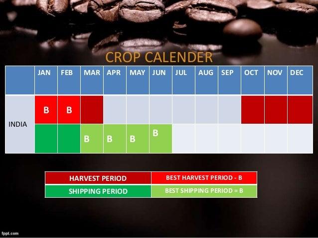 går ned i vekt Coffea canephora robusta