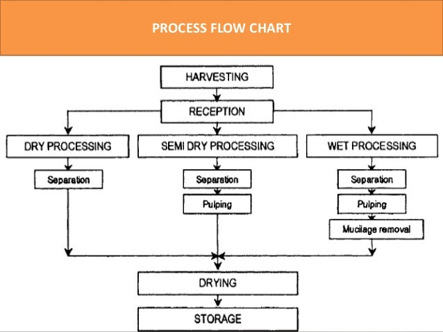 coffee processing technology