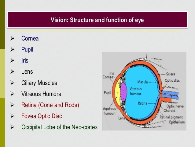 Vision: Structure and function of eye  Cornea  Pupil  Iris  Lens  Ciliary Muscles  Vitreous Humors  Retina (Cone an...