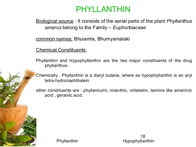 18 Biological source : It consists of the aerial parts of the plant Phyllanthus amarus belong to the Family – Euphorbiacea...