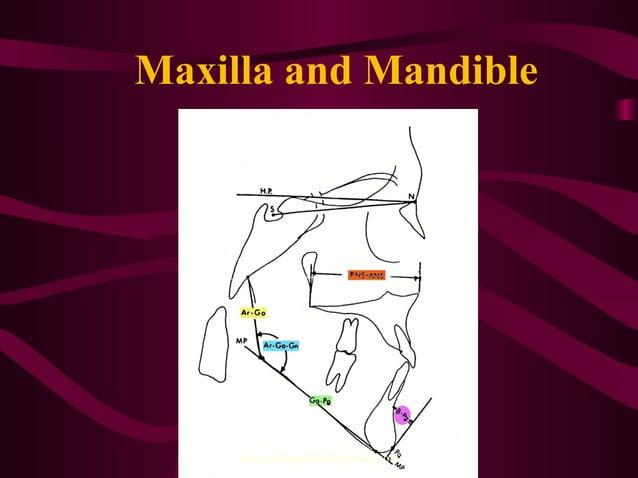 Maxilla and Mandible www.indiandentalacademy.com
