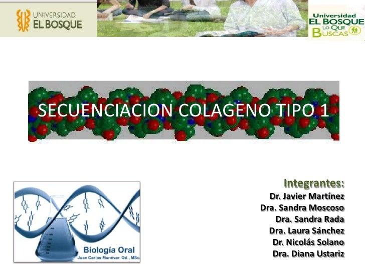 SECUENCIACION COLAGENO TIPO 1<br />Integrantes:<br />Dr. Javier Martínez<br />Dra. Sandra Moscoso<br />Dra. Sandra Rada<br...